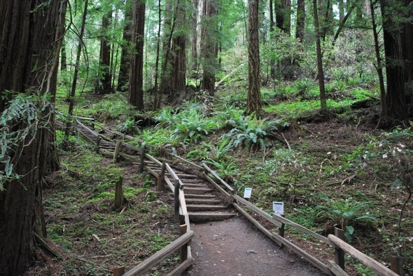 Sentier Muir Woods