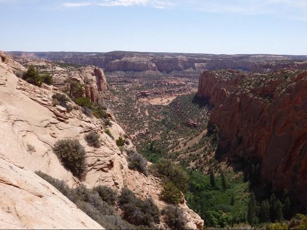 Forêt dans le Betatakin Canyon