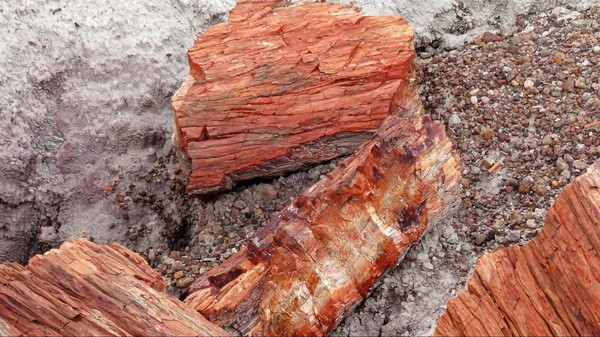 Bois pétrifié Petrified Forest & Painted Desert National Park Arizona