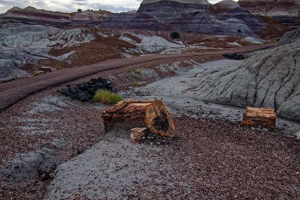 Bois pétrifié Blue Mesa Trail Petrified Forest National Park Arizona