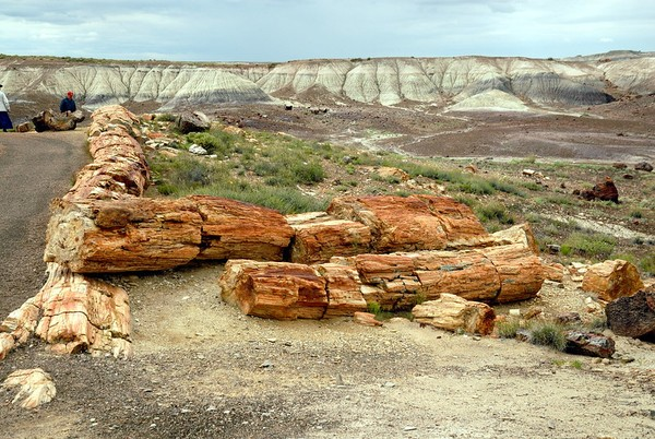 Crystal Forest Petrified Forest National Park Arizona