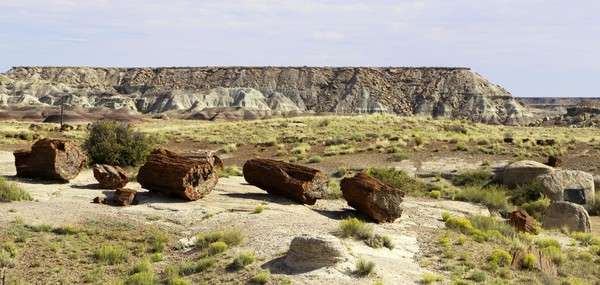 Long Logs Petrified Forest National Park Arizona