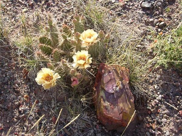 Bois pétrifié Petrified Forest National Park Arizona