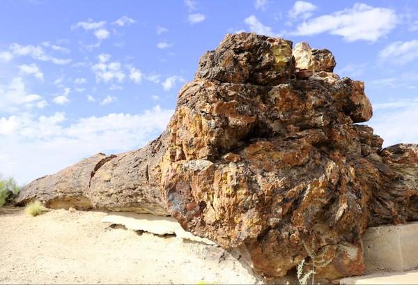 Arbre pétrifié Giant Logs Petrified Forest National Park Arizona