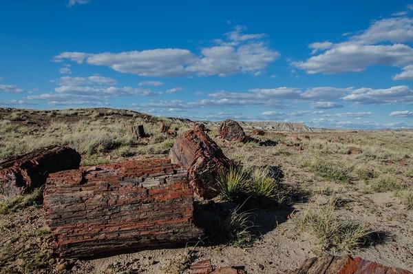 Giant Logs Petrified Forest National Park Arizona