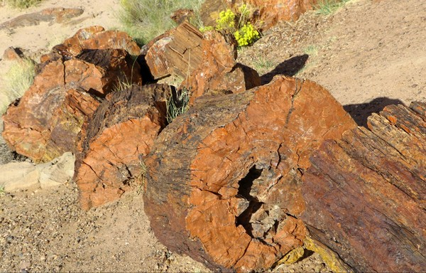Bois pétrifié Giant Logs Petrified Forest National Park Arizona