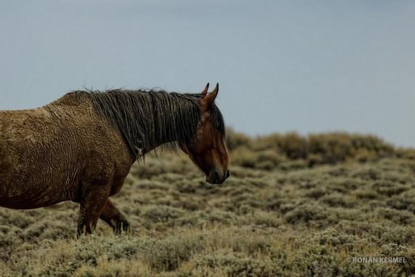 Wild Horse Wyoming