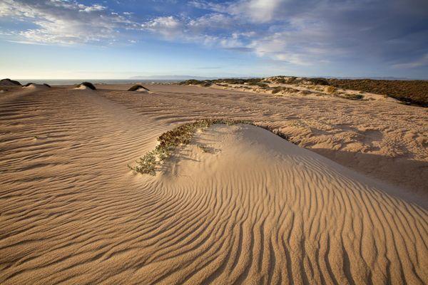 Guadalupe-Nipomo Dunes National Wildlife Refuge Californie