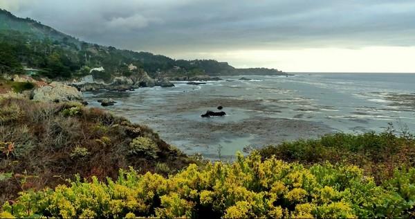 Bird Island Trail Point Lobos