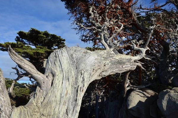 Cypress Grove Trail Point Lobos