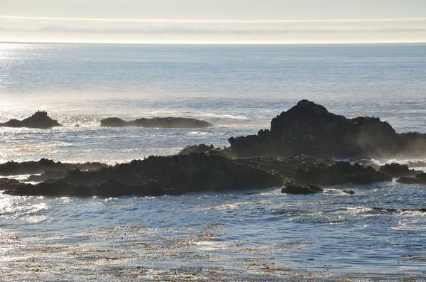 Sea Lions Point Lobos