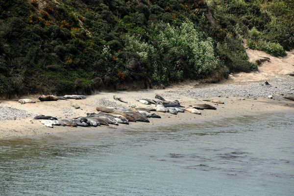 Elephant Seal Overlook Point Reyes