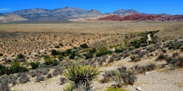 Sur la Scenic Drive Red Rock Canyon