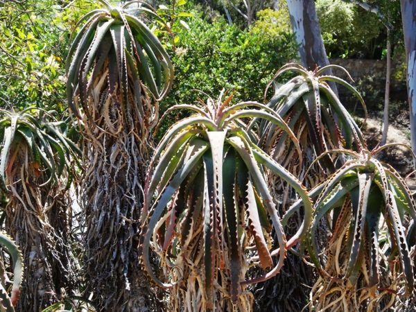 Wrigley Memorial & Botanic Garden Santa Catalina Island