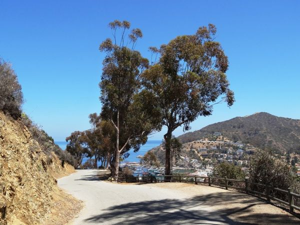 Scenic Drive Santa Catalina Island