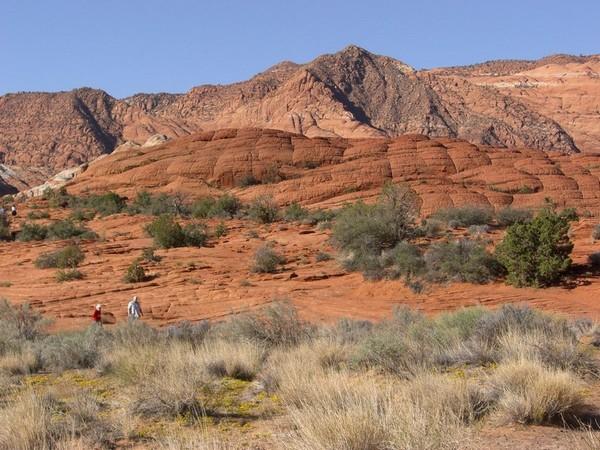 Petrified Dunes Trail Utah