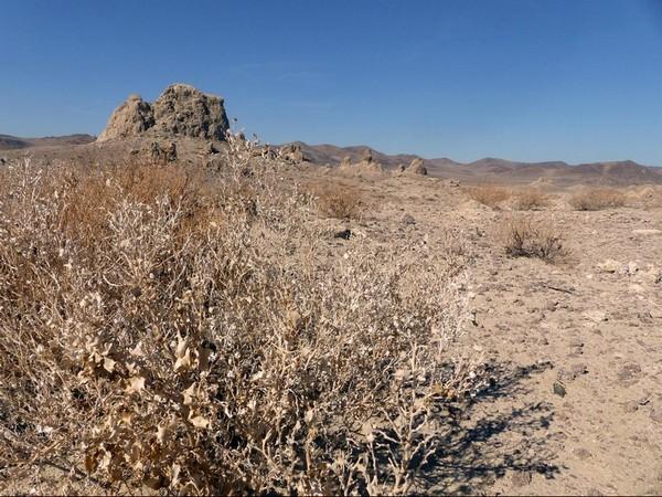 Desert Holly Trona Pinnacles