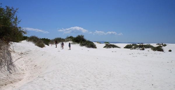 Dune Life Nature Trail White Sands