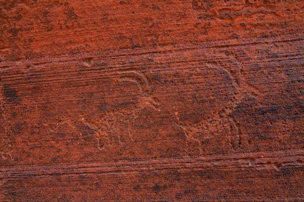 Pétroglyphes indiens Wire Pass Utah USA