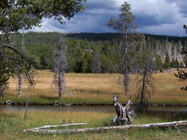 Le long de la Firehole River Yellowstone