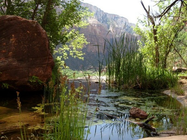 Middle Emeral Pool Trail Zion NP