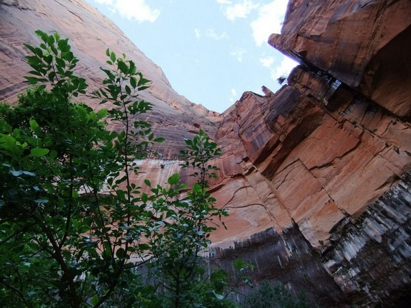 Upper Emeral Pool Trail Zion NP