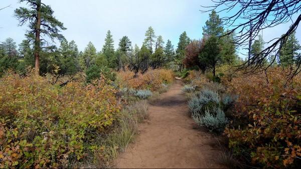 East Mesa Trail Zion NP