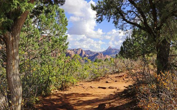 Sentier Timber Creek Overlook