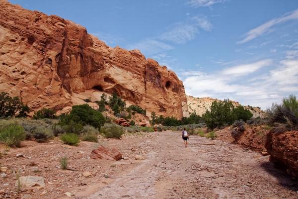 Upper Muley Twist Canyon Burr Trail Road Utah