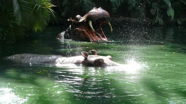 Jungle Cruise Disneyland Los Angeles