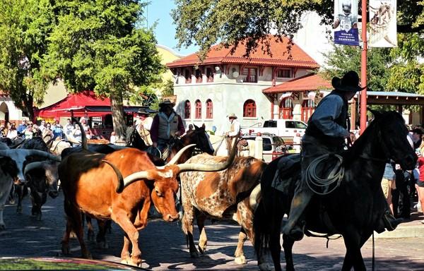 Défilé des Longhorns quartier des Stockyards Fort Worth Texas