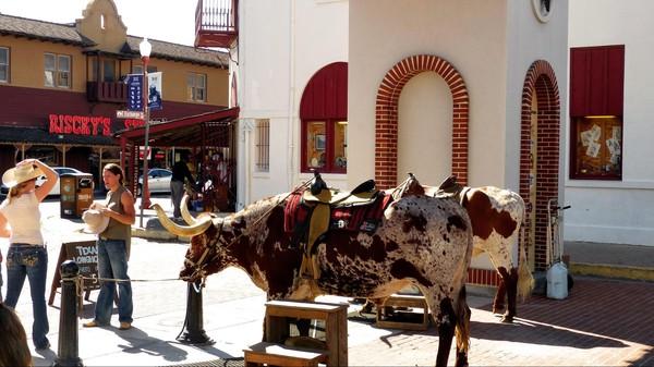 Longhorn Main Street Stockyards Fort Worth Texas