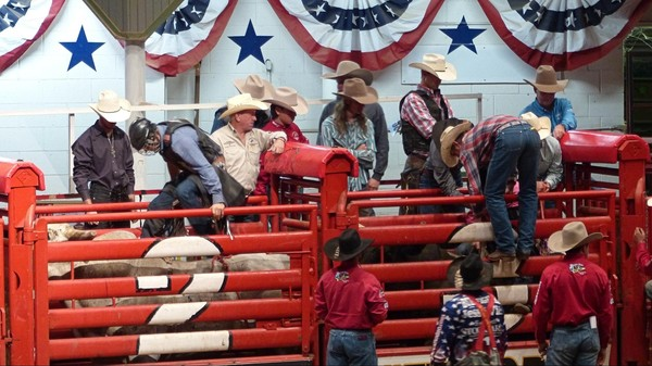 Bull Riding Stockyard Championship Rodeo Fort Worth Texas