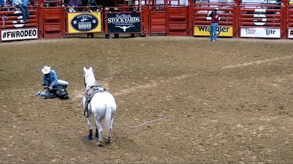 Bulldogging Stockyard Championship Rodeo Fort Worth Texas