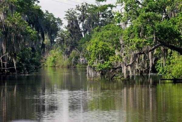 Les Bayous Louisiane