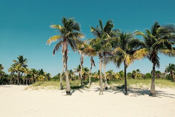 Crandon Park Beach et ses cocotiers Key Biscayne Miami
