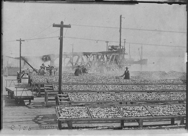 Sardine Industry, Wharf and sun dry process, Monterey 1908