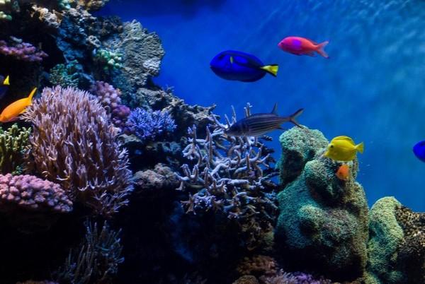Aquarium Monterey