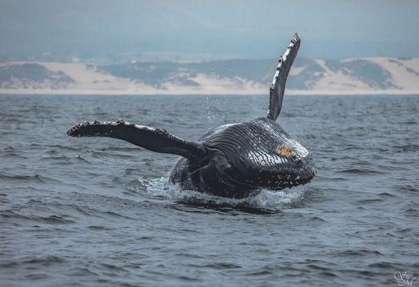 Croisière observation des baleines à Monterey