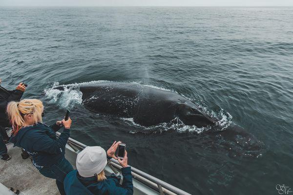 Observation des baleines à Monterey Californie