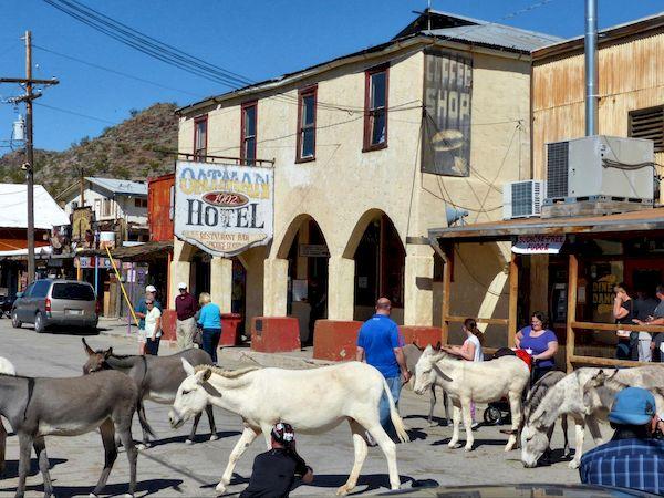 Burros en liberté à Oatman Arizona