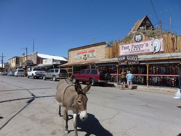 Les burros de Oatman Route 66 Arizona