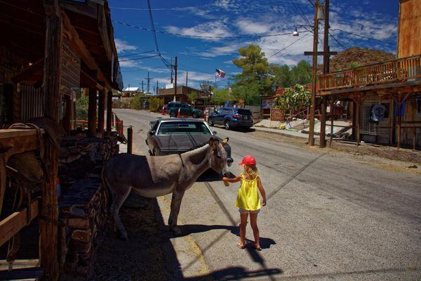 Burros en liberté à Oatman en Arizona