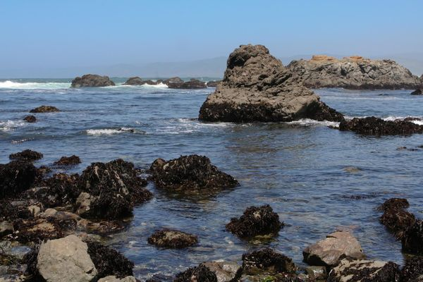 Tide Pools, Mackerricher State Park Pacific Coast Highway Californie
