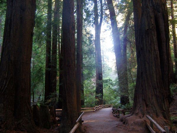 Muir Woods National Monument Californie