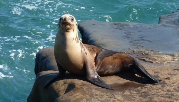 La Jolla Wildlife San Diego