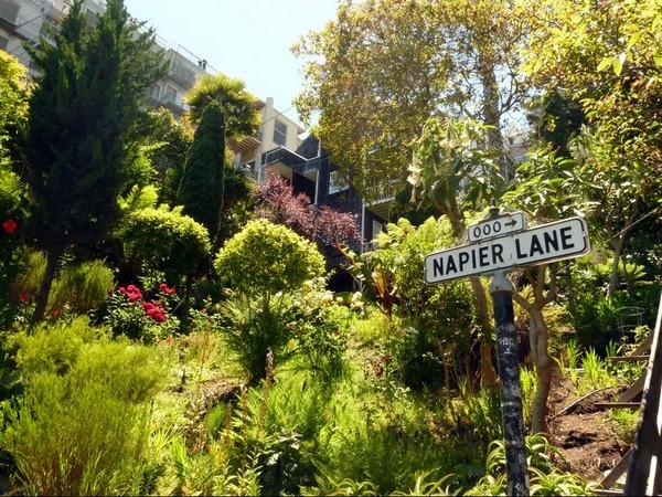 Napier Lane San Francisco