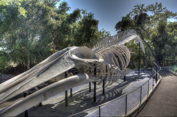 Museum of Natural History Santa Barbara