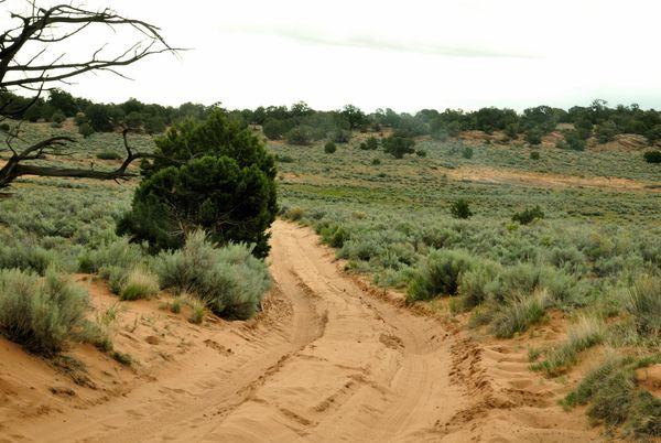 Route d'accès à White Pocket Arizona