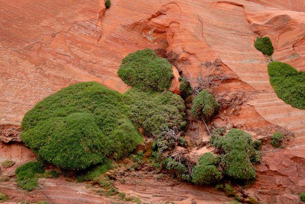 Végétation White Pocket Arizona